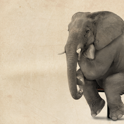 BALTNETA - WOULD YOU BUY AN ELEPHANT?